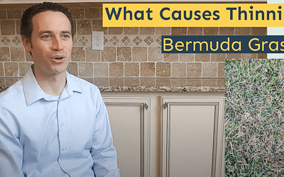 What Causes Thinning Bermuda Grass?